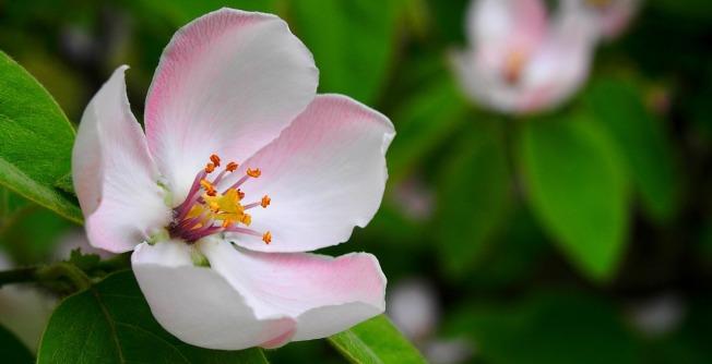 flower-1360468_1280