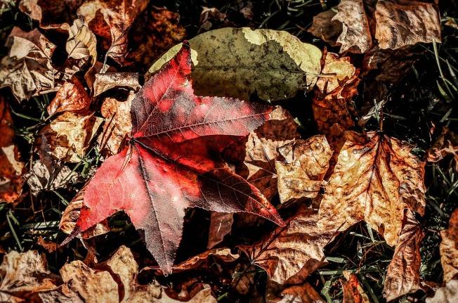 leaves-199140_1280
